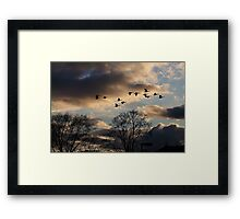 Geese Coming Home Framed Print