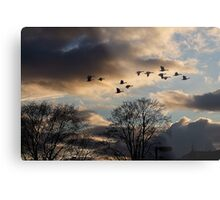 Geese Coming Home Metal Print