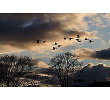 Geese Coming Home Photographic Print