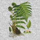 fern by Alex Magnus