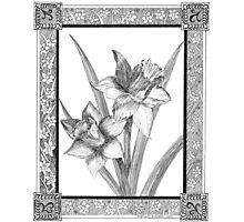 Gloucester Daffodils Photographic Print