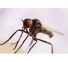 Insect Extreme Macro Fly With Pollen Photographic Print