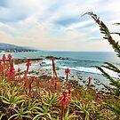 Laguna Beach Scenic View by K D Graves Photography