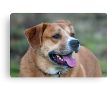 Looking for You Dog Metal Print