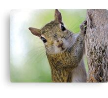 Staring Contest with a Squirrel Canvas Print