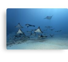 Wing Pack Canvas Print