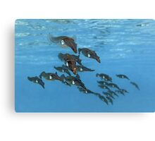 Squid Squadron Canvas Print