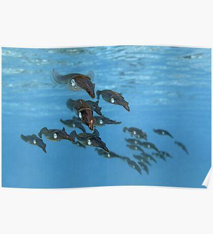 Squid Squadron Poster