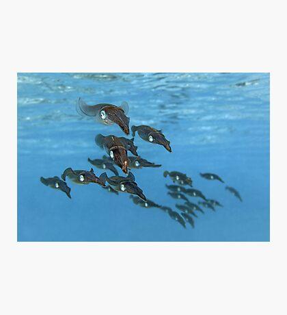Squid Squadron Photographic Print