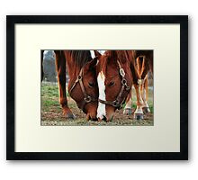 Zip and Fancy Framed Print