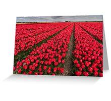 Tulip fields in springtime Greeting Card