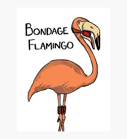 Bondage Flamingo Photographic Print