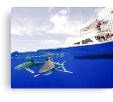 Oceanic White Tip Sharks Circle a Boat Canvas Print