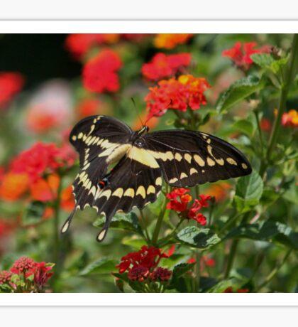 Giant Swallowtail Butterfly Sticker