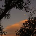 "Moon beneath a ""dragon's tail"" branch by dfrahm"