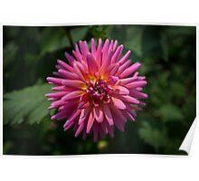 Exploding Flower Poster