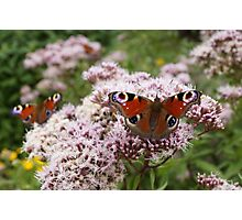 Butterfly Picnic Photographic Print