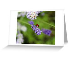 Lavender Lover Greeting Card