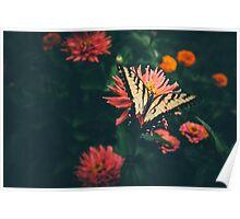 A Butterflies Home Poster