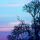 Tree on a pastel sky by Vicki Field