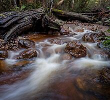 Tasmanian Bush Stream by Kelly Slater