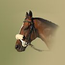 Race Horse by Declan Carr