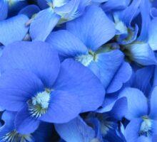 Violets Are Blue Sticker