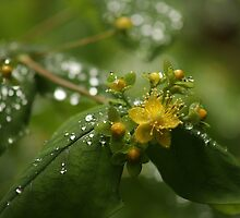 After Rain by Ursula Rodgers Photography