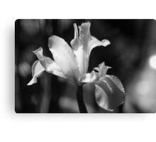 Monochrome lily Canvas Print