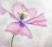 Pink Poppy by Mandy Disher
