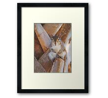 Staring Squirrel Framed Print