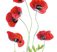 Red Poppies by Mandy Disher