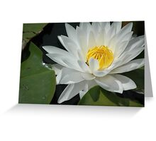 lily pad flower Greeting Card