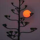 silhouette by jhawa