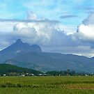 Mt Warning over the Canefields by Graeme  Hyde