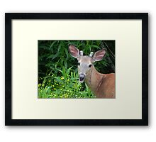 He's Back! Framed Print