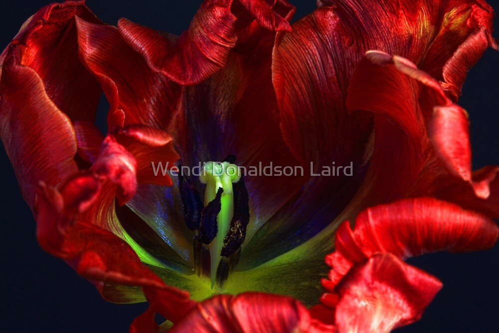See My Soul by Wendi Donaldson Laird