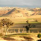 On The Road to Gundagai, NSW, Australia. by kaysharp