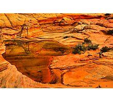 Arizona Desert Oasis Photographic Print