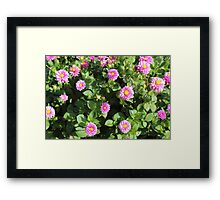 Pink & Green Framed Print