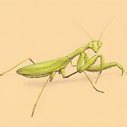 Praying Mantis by Lars Furtwaengler