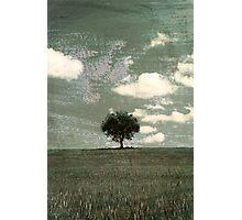 Tuscany tree Photographic Print