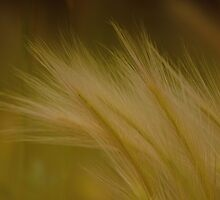 Feathery Foxtails by Dorothy  Pinder