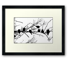 Sparrow Line Up Framed Print