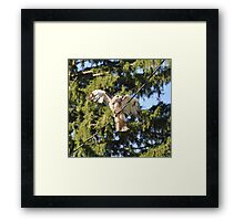 Hawk On a Wire  Framed Print