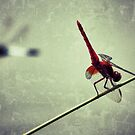 Red Leader - Incoming Incoming! by kibishipaul