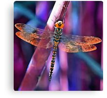 Dragonfly In Orange and Blue Canvas Print