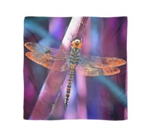 Dragonfly In Orange and Blue Scarf