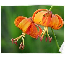 Michigan Lilies Poster