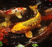 Koi Fine Art Photography Version 1 by RedCoatStudio